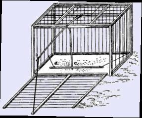 Клетка для ловли птиц своими руками